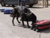 Vzorky rohoviny slouží pro výcvik služebních psů  Foto: J. Stejskal